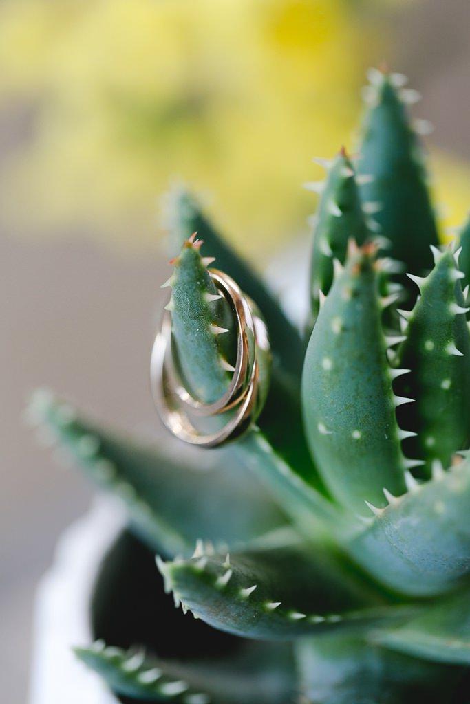 goldene Eheringe auf einem kleinen grünen Kaktus