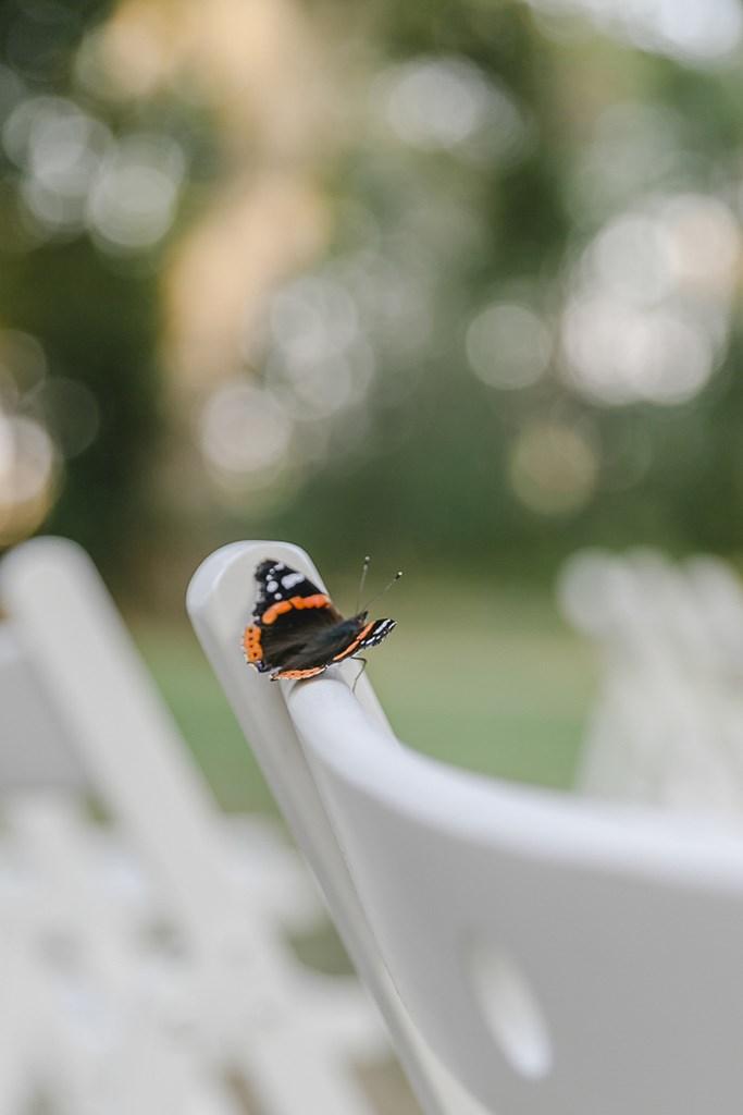 ein Schmetterling auf einem Stuhl bei der Freien Trauung | Hochzeitsfoto: Hanna Witte